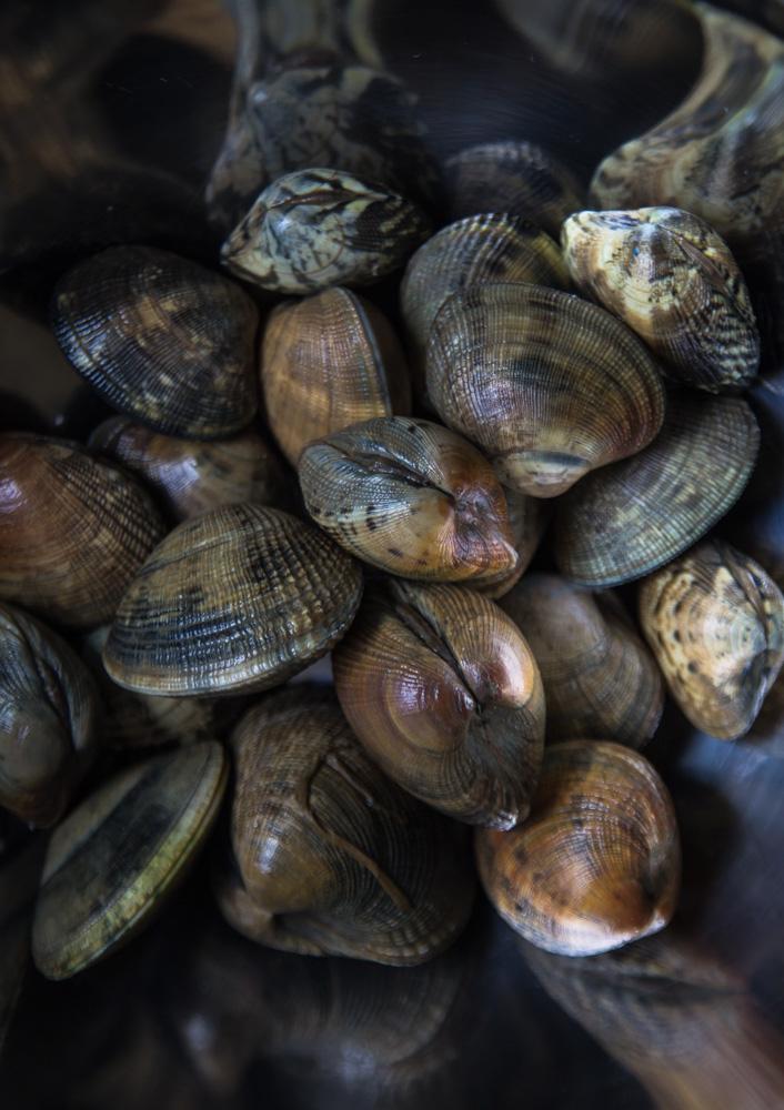 clams- IMG_7580