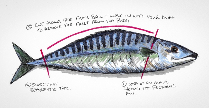 mackerel drawings- Scan 2017-7-19 15.36.32