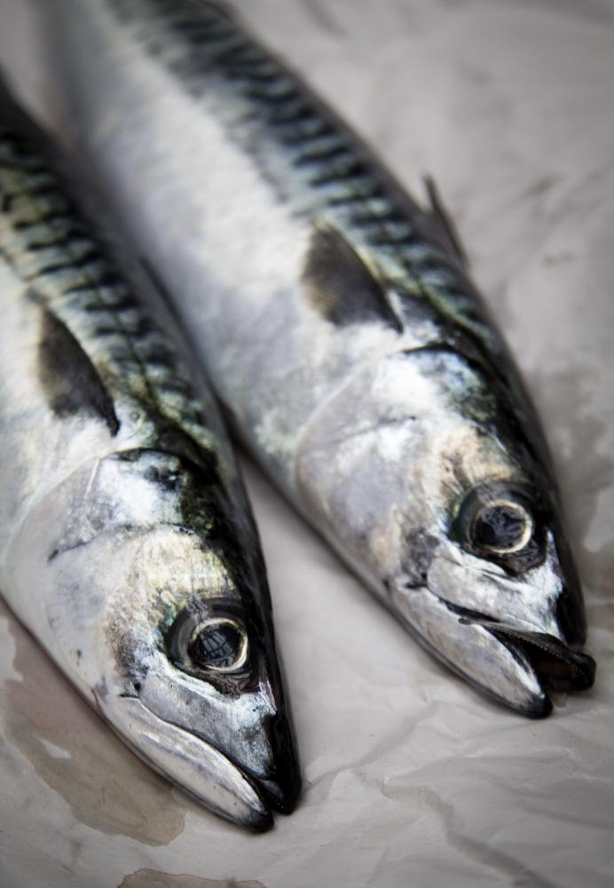 mackerel- IMG_4244-2